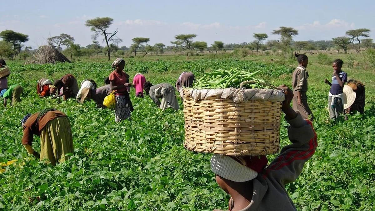 Environmental factors affecting agricultural production in Nigeria