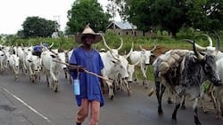 Farmers, Miyetti Allah finally agree to end farmer-herder crisis, vow to expose criminals among them