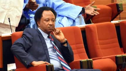 Tinubu has done his best, governors have no respect for Buhari - Shehu Sani opens up on APC crisis