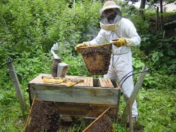 Traditional beekeeping in Nigeria vs modern methods Legit.ng