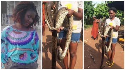 Praises as lady escapes being strangled by a HUGE python (photos)