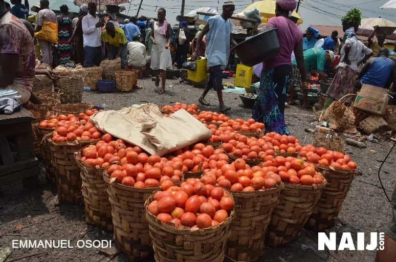 FG announces new policy to boost tomatoes production in Nigeria