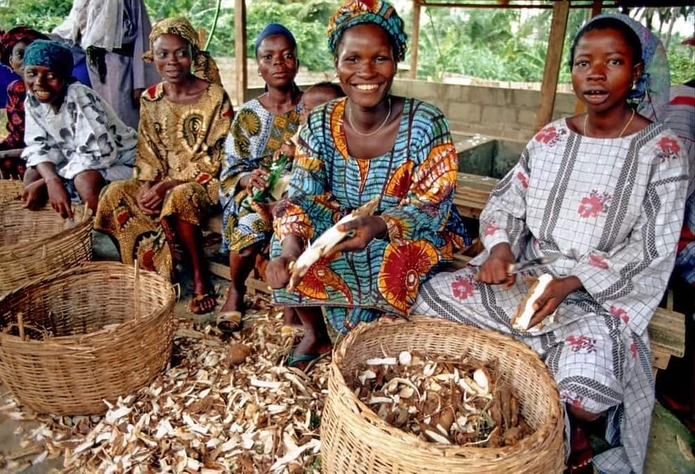 Cassava processing steps you should know ▷ Legit ng