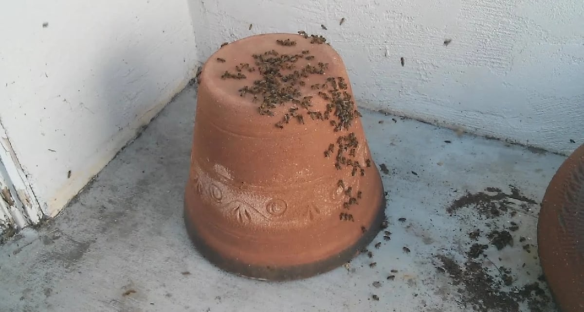 The clay-pot hive