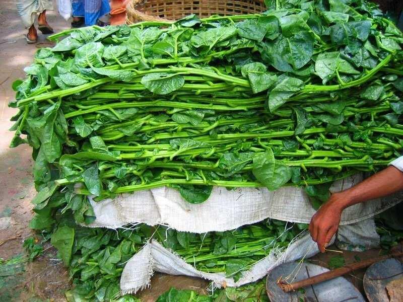 Yoruba herbs for fertility ▷ Legit.ng