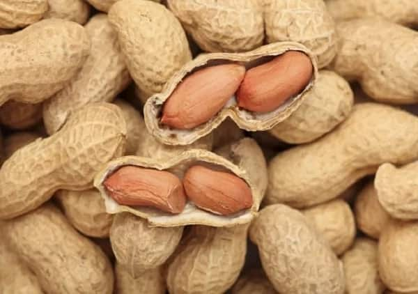 10 health benefits of groundnut ▷ Legit ng