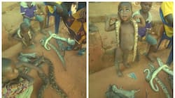 Kids spotted playing with dead snakes and bushmeat for sale in Edo (photos)