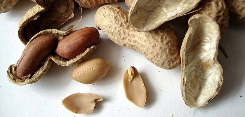 Is there a difference between peanut and groundnut?