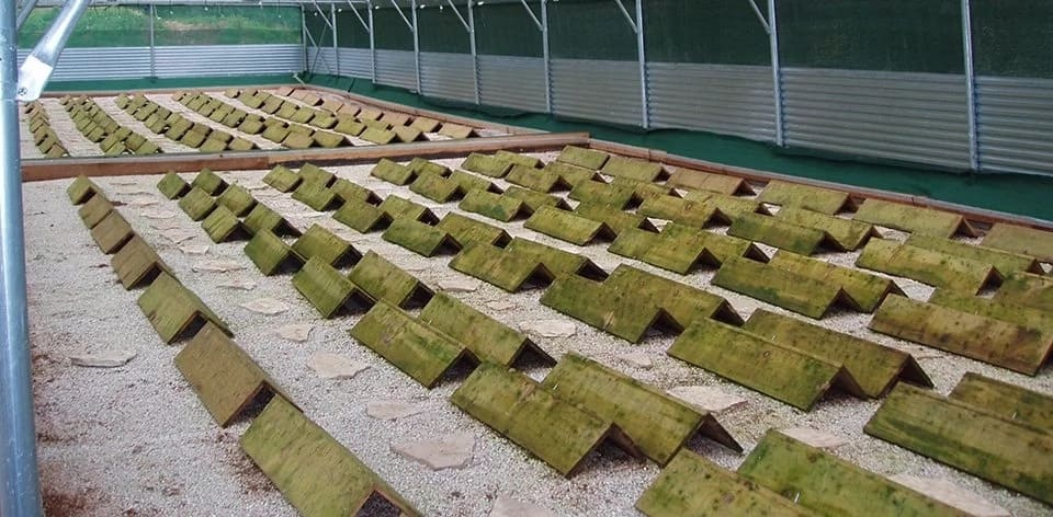 Example of outdoor snail farm