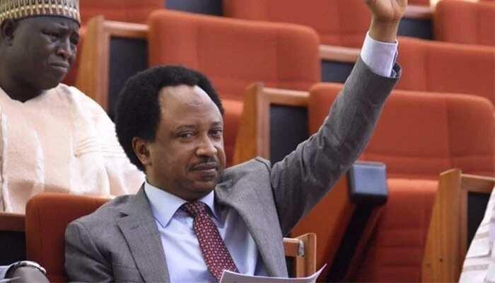 Zaben fidda gwani: Shehu Sani da wasu 'yan takara 14 sun yiwa APC tawaye a Kaduna