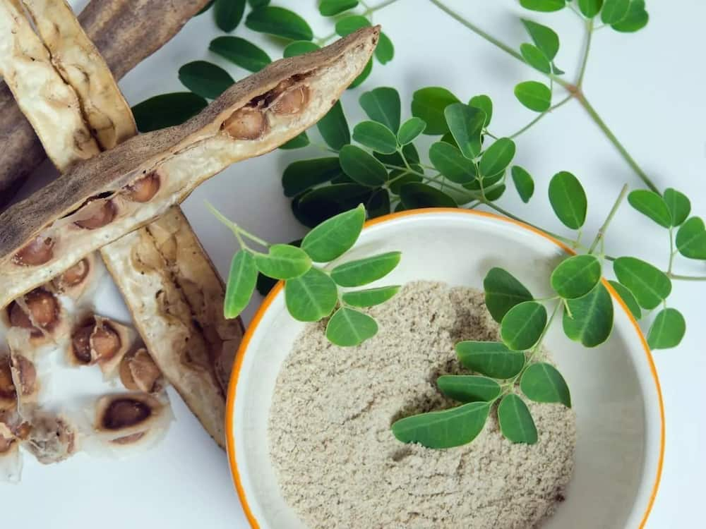 Moringa seed benefits and side effects ▷ Legit ng