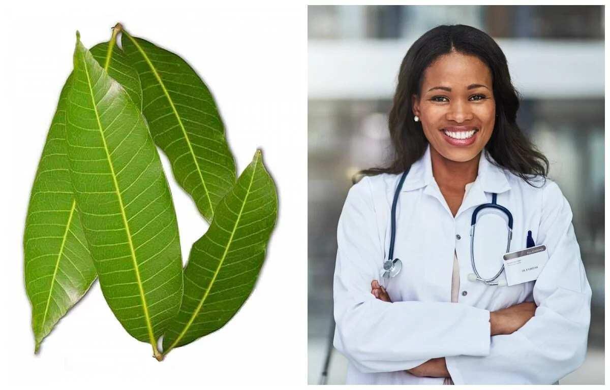 Medicinal use of mango