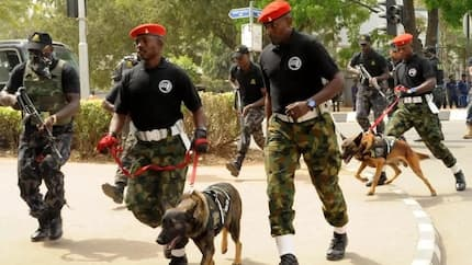 750 cattle rustlers, kidnappers swear with Holy Qur'an, renounce violence in Kaduna