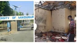 Breaking: Days after releasing lecturers, Boko Haram launches attack at University of Maiduguri