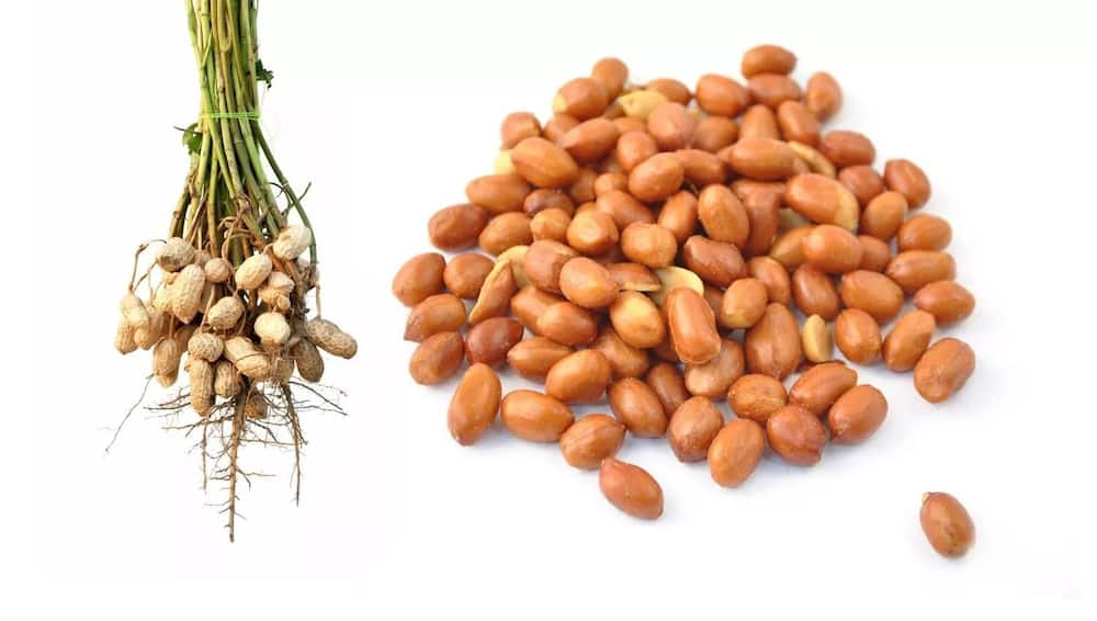 Difference between peanut and groundnut