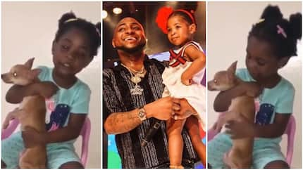 Most adorable video of Imade thanking her dad Davido for new dog, she named it Bubbles