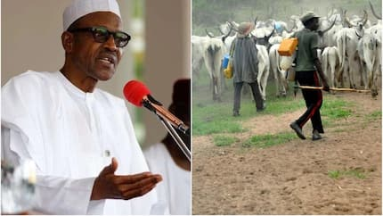 The current deadliest threat to Nigeria is escalating battles between farmers and herders - US institute