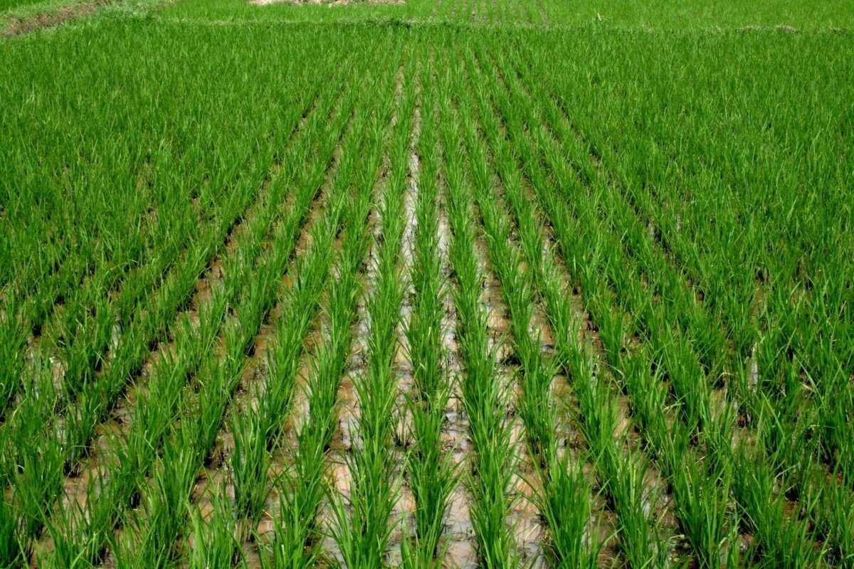 agricultural loan in Nigeria