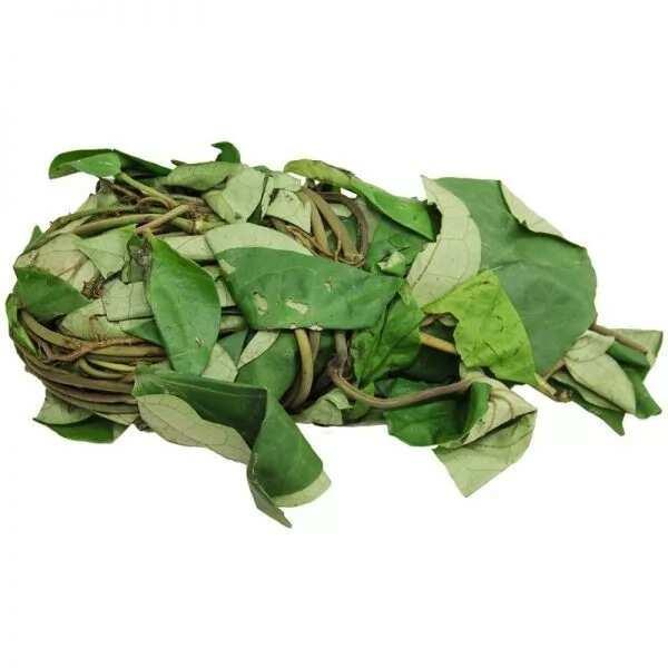 Health benefits of utazi leaves ▷ Legit ng