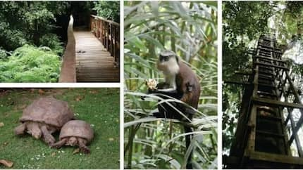 Lekki conservation centre is the best place to visit! - Find out the gate fee in 2018
