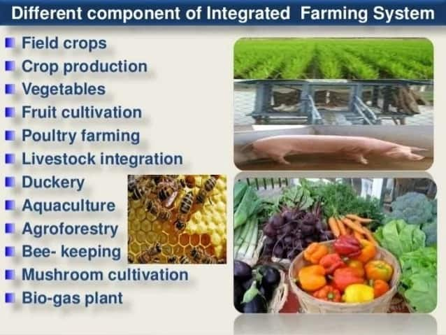 Components of integrated farming system