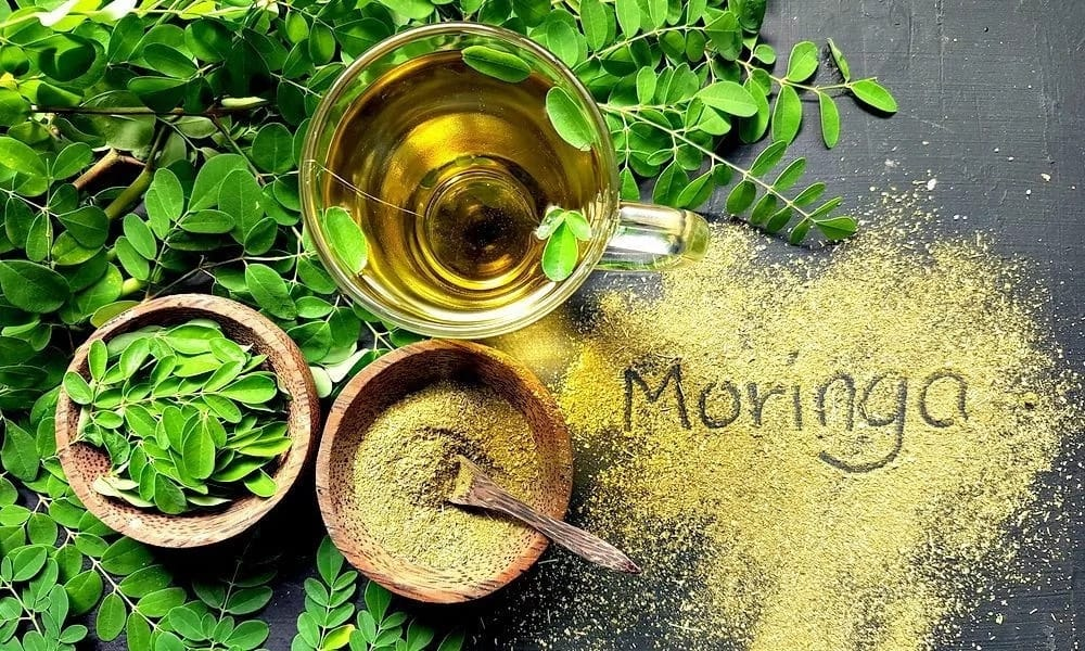 How to use moringa leaves as medicine