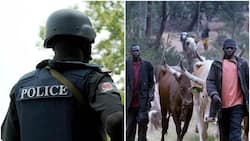 Police command calls for peace meeting between herdsmen and farmers
