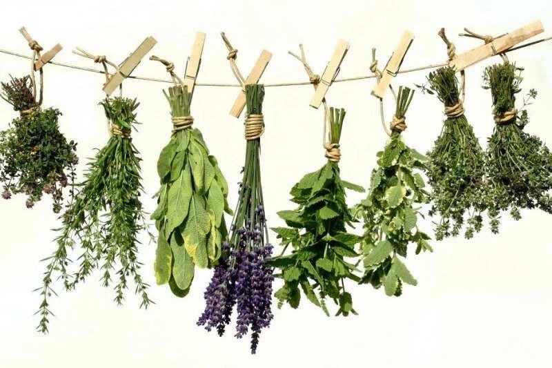 Yoruba herbs and their uses ▷ Legit ng