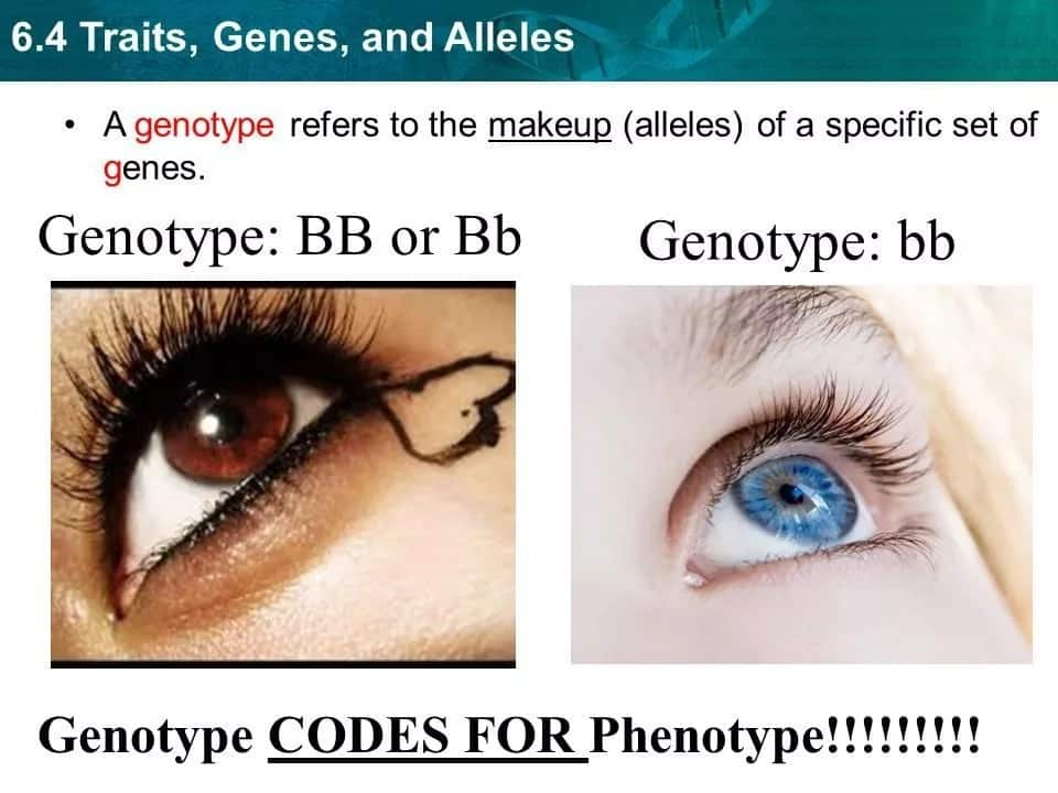 Types of genotypES