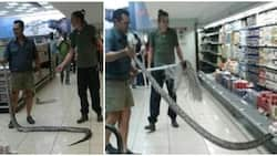 Surprise! Woman gets shock of her life after pulling 3.6-meter python from supermarket's fridge (photos, video)