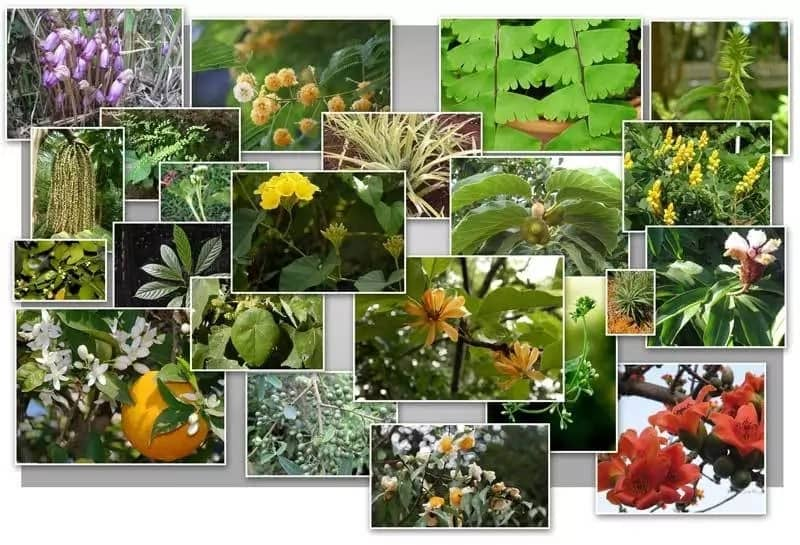 Medicinal plants in Nigeria