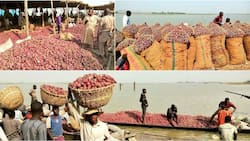 BREAKING: Northern onion marketers to stop supply to southern Nigeria