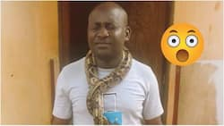 Na wa o! See what man was caught doing with a huge python (photos)