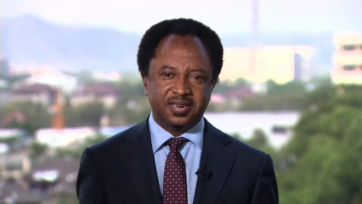 Shehu Sani disagrees with Federal Government on defeat of Boko Haram