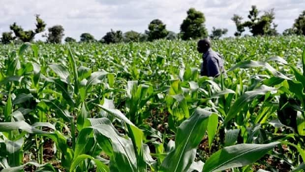 Agricultural grants in Nigeria