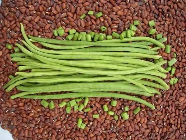 Cowpea production in Nigeria