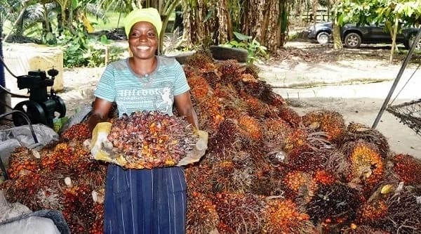 Image result for palm oil in nigeria