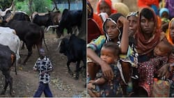 Massive famine looms in 2018 and 2019 due to herdsmen attack
