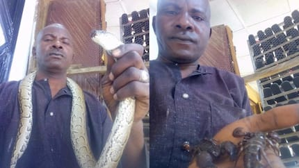 Man proudly displays snake and scorpions he found in Borno state (photos)