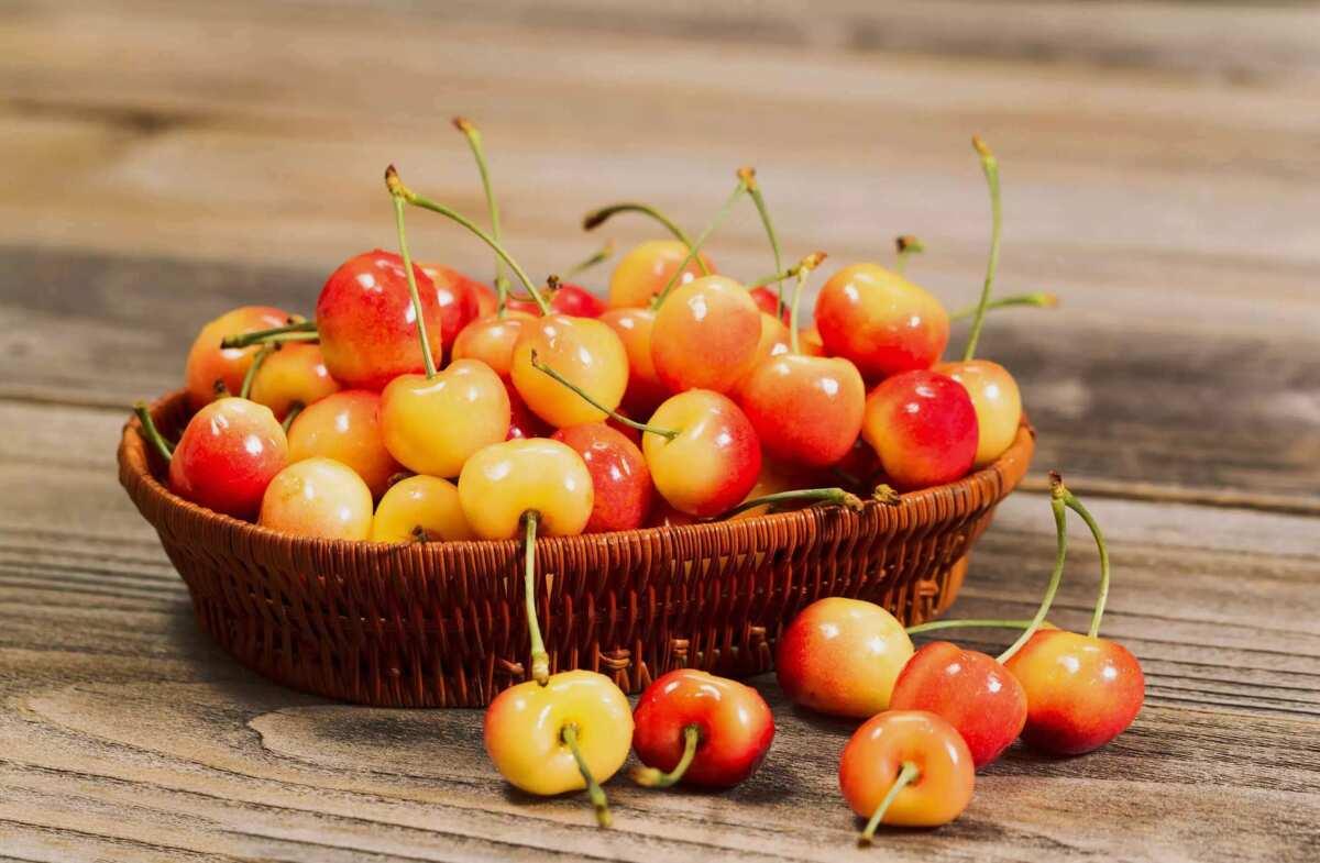 rainer cherries
