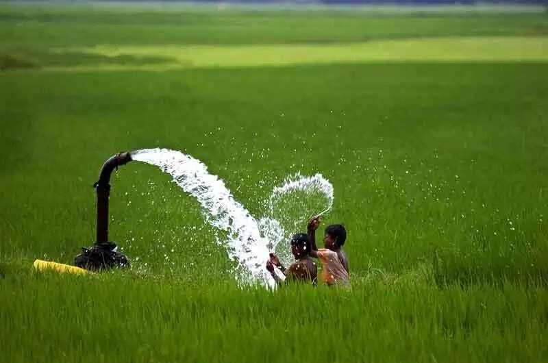 grass in Nigeria