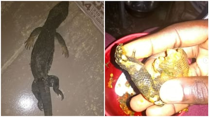 Lady shares photos of how she cooked using lizard instead of meat, thanks God