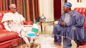 2019: Nigeria deserves better than what Buhari can offer - Obasanjo