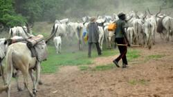 No southwest governor must cede any land for cattle ranching - Afenifere rejects FG's plan
