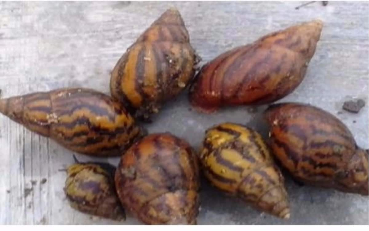 How to start snail farming business and grow rich in Nigeria