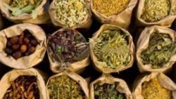 English names of popular Yoruba herbs