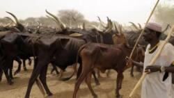 Makiyaya 4,000 sun yi hijra daga jihohin kudu zuwa jihar Kaduna
