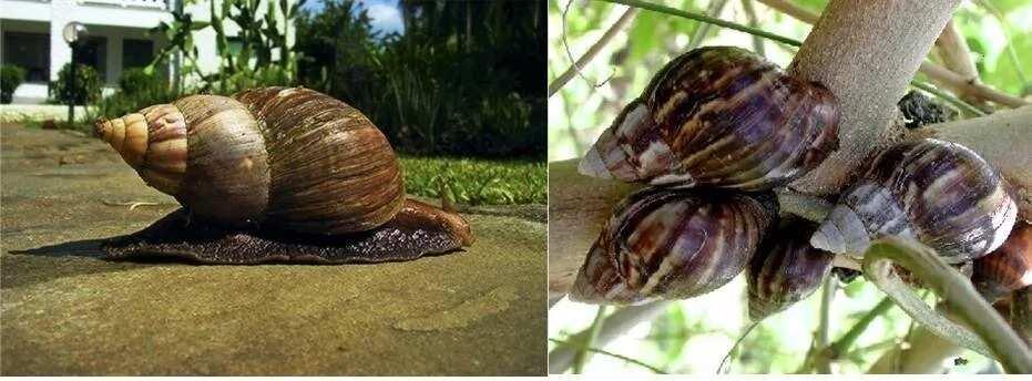 Snail farming business plan in Nigeria