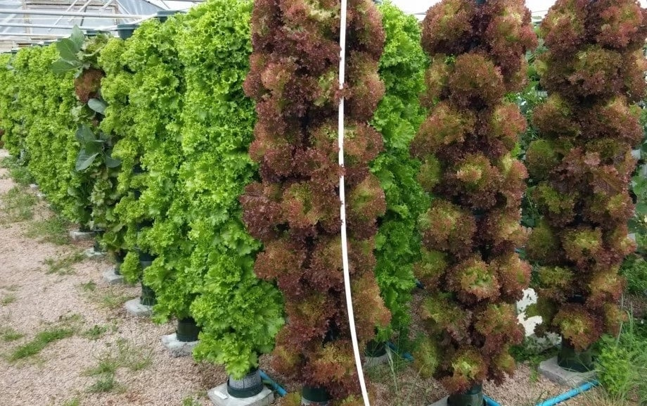 Advantages and disadvantages of hydroponics farming!