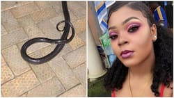 See the long black snake a lady found in her toilet bowl, warns everyone to be careful